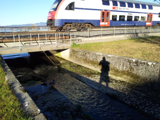 the train, the stream, the ducks and me
